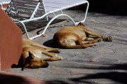 Dogs in the sun ...